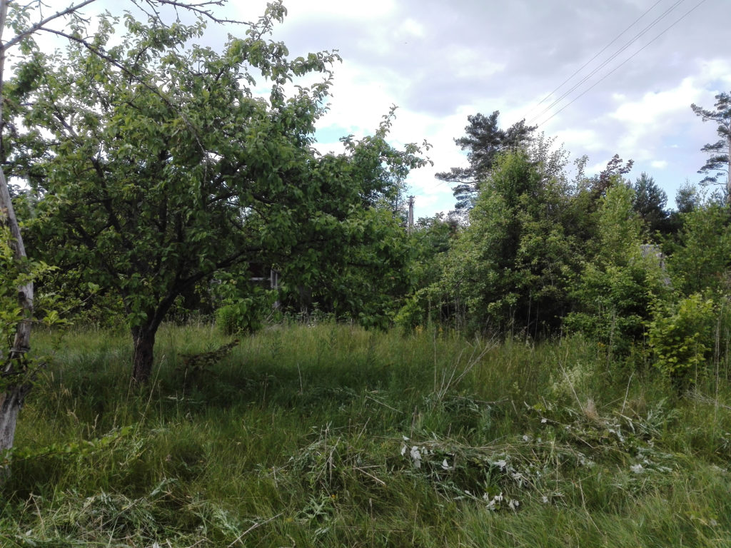 My purchased plot of land in Lithuania